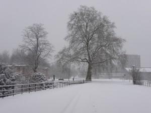 Neige à Lille 328