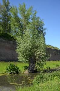 Parc de la Citadelle 71
