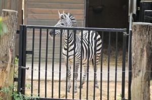 Zoo de Lille 2017 - 23